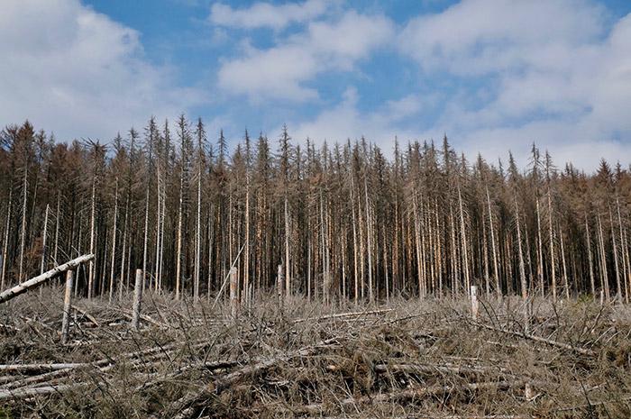Investitionszuschüsse zu Digitalisierung und Technik für die nachhaltige Waldwirtschaft